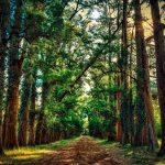 Como economizar tempo enquanto caminha?